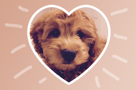 Linda Metcalf, Ph.D., director of graduate counseling programs, talks about Valentine's Day, puppies and the simple, yet fulfilling, gift of gratitude. Above: Ringo, Metcalf's new puppy, is a therapy dog-in-training. He is already making a positive impact on her counseling clients.