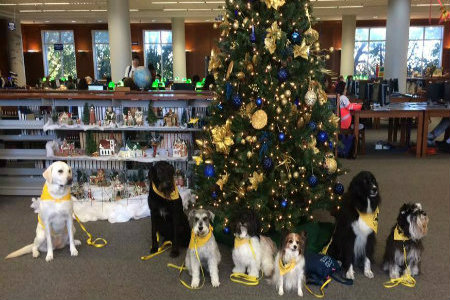 therapy dogs in front of christmas tree