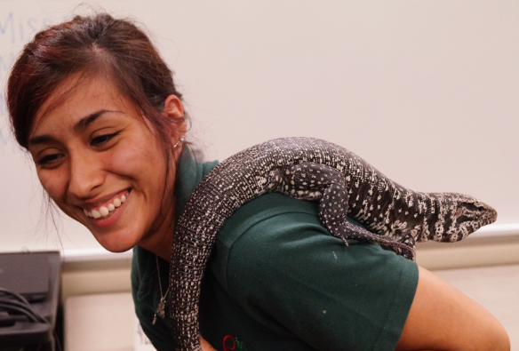 Maria's friend is Tupinambis merianae, an Argentine black and white tegu.